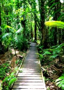 Beautiful Cairns Botanical Gardens